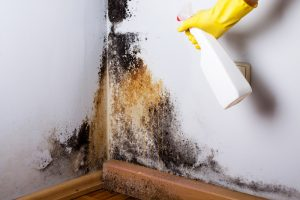 killing mold with bleach