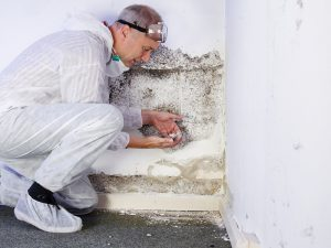 Technician Treating Mold